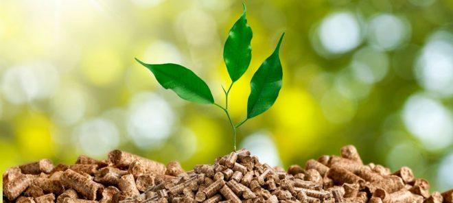 biomasa sabadell